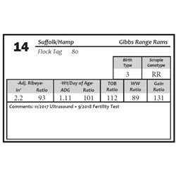 Lot 14 - Suffolk/Hamp