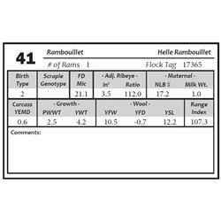 Lot 41 - Rambouillet