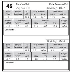 Lot 45 - Rambouillet