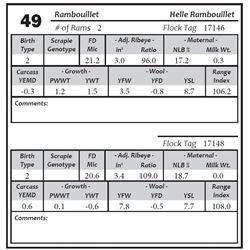Lot 49 - Rambouillet