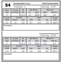 Lot 54 - Rambouillet Cross