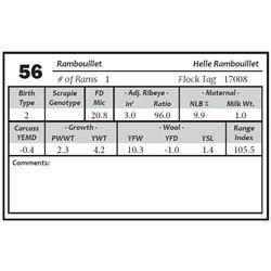 Lot 56 - Rambouillet