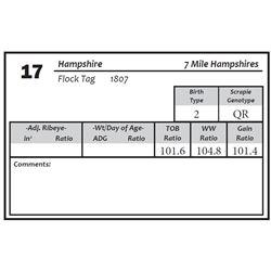 Lot 17 - Hampshire