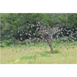 4-DAY / 3-NIGHT ARGENTINA DOVE HUNT – 3 HUNTERS