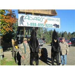 BLACK BEAR HUNT      SUSSEX/NEW BRUNSWICK, CANADA