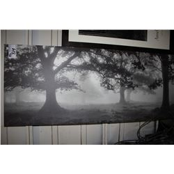 CANVAS PRINT - TREES IN THE EARLY MIST
