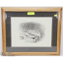 FRAMED BROWN TROUT LITHOGRAPH BY DALLEN