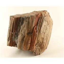 Large Petrified Wood