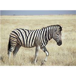 NUMZAAN SAFARIS | 7 Day, 2 Hunter, 2 Non-hunter, 4 Trophies