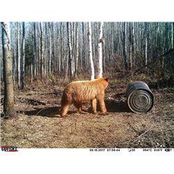 BLACK BEAR HUNT IN SASKATCHEWAN