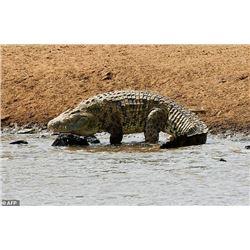 ROCHE SAFARIS MOZAMBIQUE | Crocodile Hunt for One Hunter and One Non-Hunter