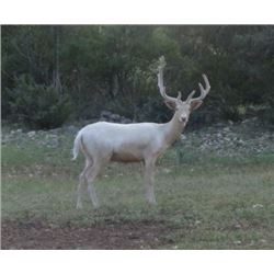 TEXAS EXOTIC HUNT FOR TWO - Calhoun Ranch Wimberley Texas