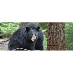 MICHIGAN BLACK BEAR HUNT - Wild Spirit Guide Service