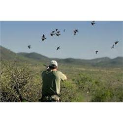 Argentina Dove Hunt