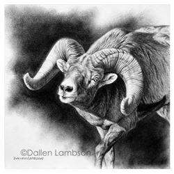 Orginal Dallen Lambson Graphite