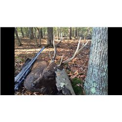 Williamson Outfitters  3 Day Sitka Deer Hunt