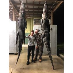 Florida Gator and Hog Hunt