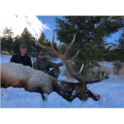Wyoming Cow Elk Hunt