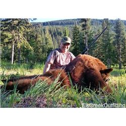 6 Day Black Bear Hunt and Fishing for 1 Hunter and 1 Observer with Elk Creek Outfitting in Montana