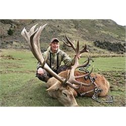 New Zealand Red Stag and Fallow Hind hunt with Spey Creek Outfitters