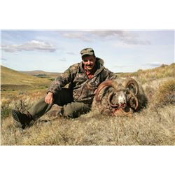 Argentina Multihorn Sheep hunt with Algar Safaris