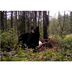 7 Day Black Bear Hunt in Ontario for 2 Hunters