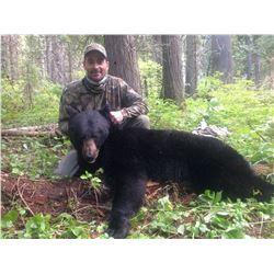 Idaho Black Bear Hunt for 1 hunter (with excellent youth option)