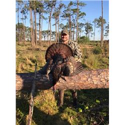 Osceola Turkey Hunt for 2 Hunters in Florida