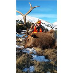 5 Day Rifle Guided Elk hunt in Colorado for one hunter