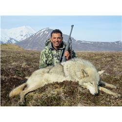 Alaska Fall Wolf & Wolverine Combo Hunt