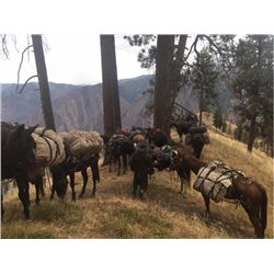 Idaho Wilderness Horseback Horseback Mule Deer Hunt for 1 Hunter