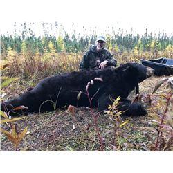 7-day Giant Black Bear Hunt in Minnesota