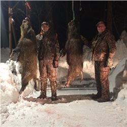 3-day Giant Boar Hunt in UP Michigan for 1 hunter