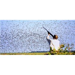 5 Day/4 Night high-volume Argentina dove shoot for 6 hunters