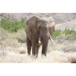 Namibia Trophy Bull Elephant Hunt, IMPORTABLE INTO THE USA for 1 Hunter