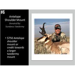 Antelope Shoulder Mount or Credit Towards a Larger Mount