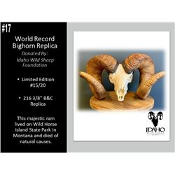 "WORLD RECORD Bighorn Sheep 216 3/8"" B"