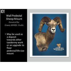 Wall Pedestal Sheep Mount by Dewey Wildlife Studios