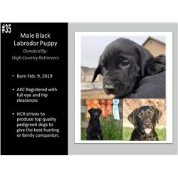 Male Black Labrador Puppy- High Country Retrievers