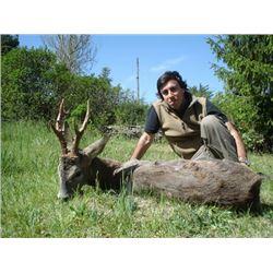 European Roe Deer Hunt in Spain