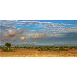 5- Day Uganda Plains Game Safari for One Hunter