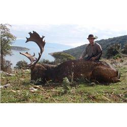 Fernando Saiz : Fallow Deer Hunt in Spain