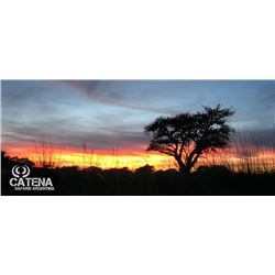 5 Days  All- Inclusive Hunting  For 4 Hunters in La Pampa State, Argentina +Trophies