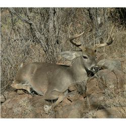 *Mexico – 6 Day – Coues Deer Hunt for One Hunter