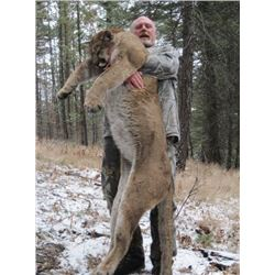 *British Columbia – 7 Day – Mountain Lion Hunt for One Hunter