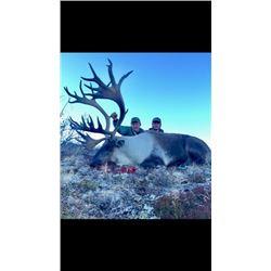 Yukon - 11 Day – Mountain Caribou Hunt for One Hunter