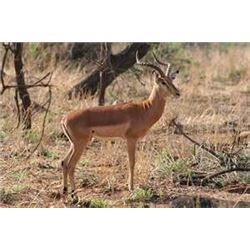 South Africa – 10 Days (8 hunting)  - Plains Game Safari for 1/2 Hunters