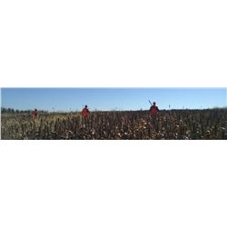 Michigan – 1/2 Day Pheasant Hunt for Three Hunters
