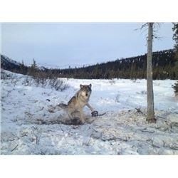 Alaska – 7 Day – Trapline/Wolf Hunt for One Hunter
