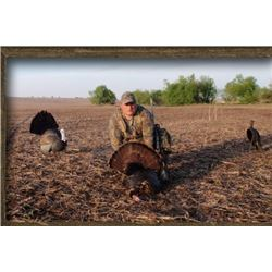 Missouri - 3 Day Eastern Turkey Hunt for One Hunter